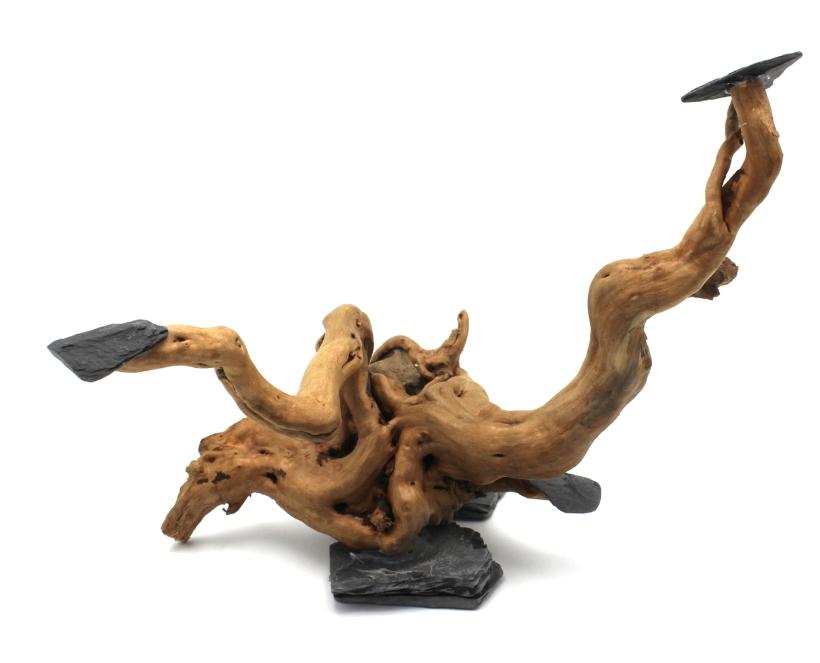 Erster_Baum